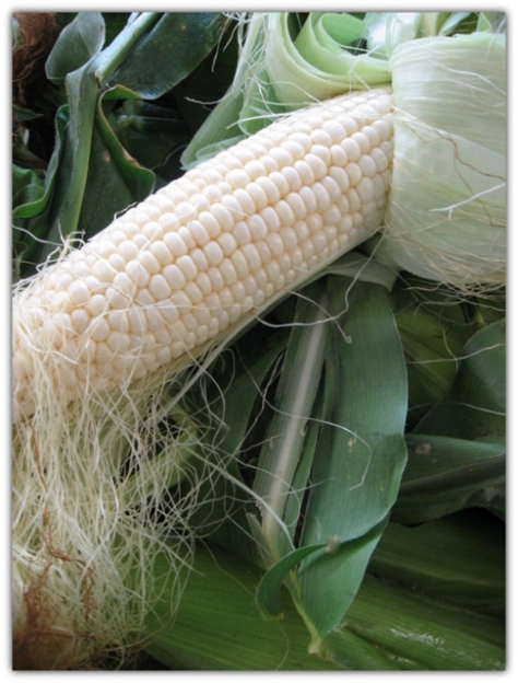 1-georgia white corn