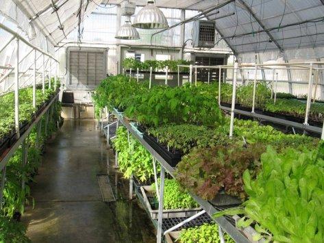bluebird greenhouse 3