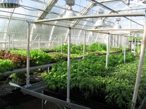 bluebird greenhouse herbs
