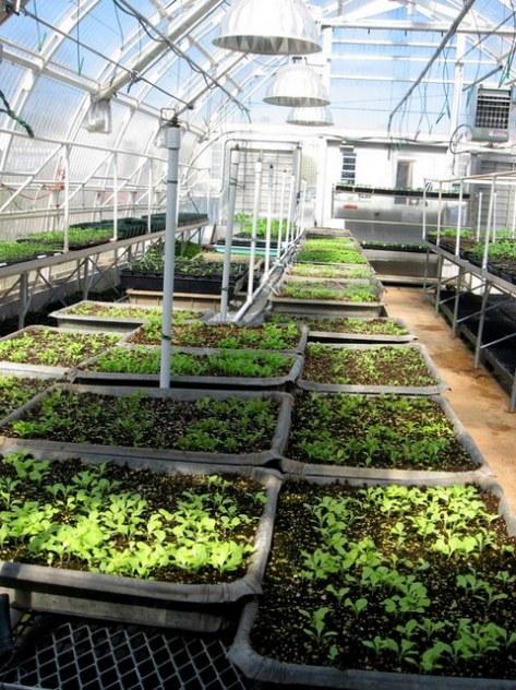 bluebird greenhouse seed starting