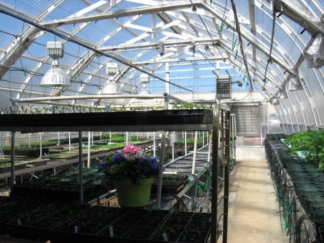 bluebird greenhouse