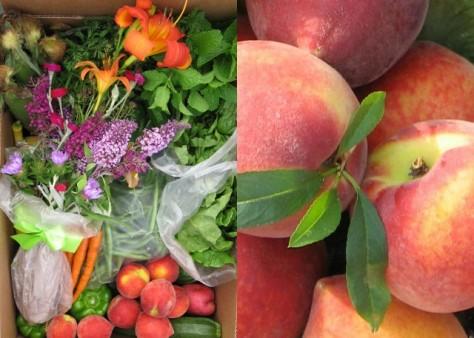 dickey farms peaches