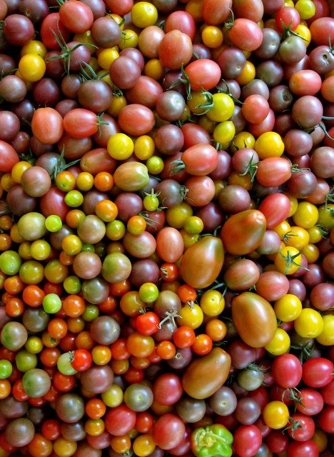 hierloom cherry tomatoes locally grown griffin